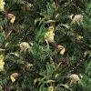 Tou-Can Hide B - Liberty Tana Lawn - SS21 Atlas of Dreams Collection