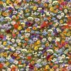 Brockenhurst C - AW21 The New Collectables Collection - Liberty Fabrics Tana Lawn